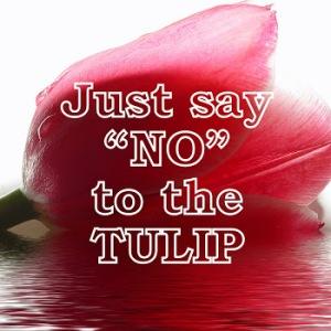 tulipdown2