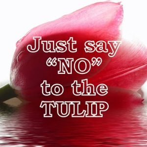 tulipdown2
