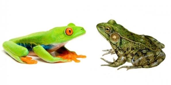 perbedaan-katak-dan-kodok